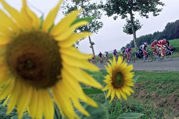 cyclists ride near to sunflowers during the 15th stage of the 88th Tour de France between Pau and Lavaur 24 July 2001.   AFP PHOTO JOEL SAGET / AFP PHOTO / JOEL SAGET