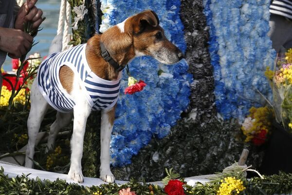 "A dog stands on a flower-decorated boat during the traditional ""battle of flowers"" carnival event, on February 15, 2016, in Villefranche-sur-Mer, southeastern France. / AFP PHOTO / VALERY HACHE"