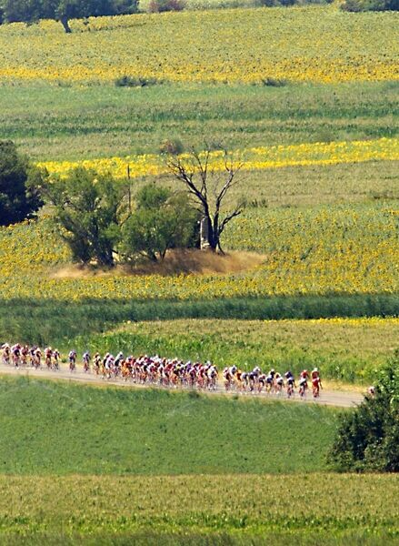 The cyclists of the 85th Tour de France pass through the fields of sunflowers during the first kilometers of the 14th stage of the French cycling race between Valreas and Grenoble, southern France, 26 July