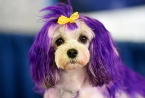 7th Annual AKC Meet The Breeds - Westminster Kennel Club Dog Show