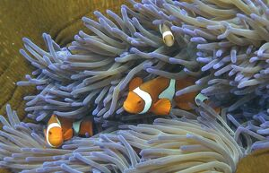 AUSTRALIA-CONSERVATION-REEF-ENVIRONMENT