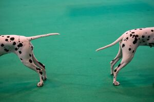 BRITAIN-ANIMAL-DOG-CRUFTS