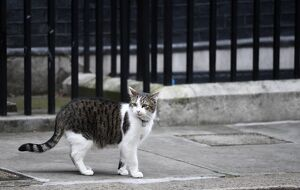 BRITAIN-BREXIT-DOWNING STREET CAT