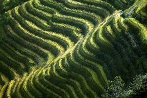 CHINA-MINORITIES-RICE-TERRACES