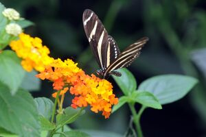 COLOMBIA-BUTTERFLIES-EXHIBITION