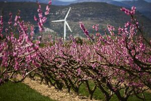 FRANCE-AGRICULTURE-FRUITS-ORCHARDS-SPRING-WEATHER-FEATURE
