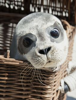 GERMANY-ANIMALS-SEAL
