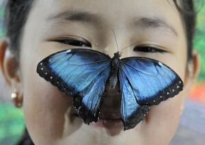 KYRGYZSTAN-BUTTERFLY-EXHIBITION