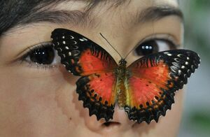 KYRGYZSTAN-NATURE-BUTTERFLY-EXHIBITION
