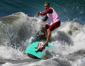 LIFESTYLE-US-ANIMAL-PETS-DOGS-SURFING