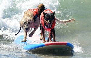 US-AMINALS-SURF-DOGS
