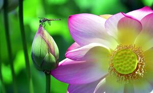 us tourism nature dragonfly flowers
