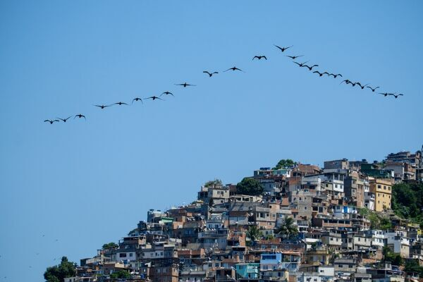 Brazil-Bird-Vidigal-Shantytown