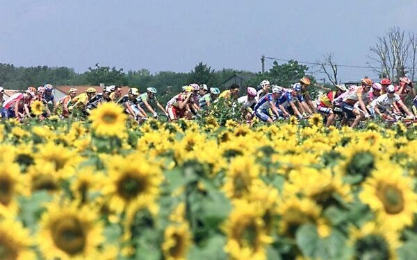 The cyclists of the 84th Tour de France pass by a field of sunflowers during the fifth stage of the Tour de France between Chantonnay and La Chatre, centre France, 10 July. (ELECTRONIC IMAGE)   / AFP PHOTO / PASCAL PAVANI