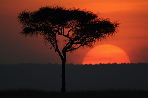 Kenya-Sunset-Nature. The sun sets over the Olare Orok conservancy within