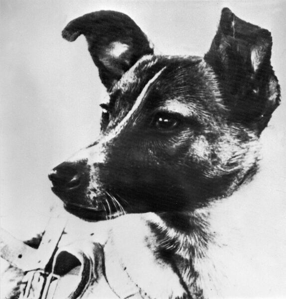 Picture from the Soviet daily Pravda dated 13 November 1957 of the dog Laika, the first living creature ever sent in space, onboard Sputnik II. Soviet spacecraft Sputnik 2 was launched from the Baikonur cosmodrome in Kazakhstan, 03 November 1957