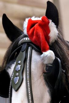 AUSTRALIA-CHRISTMAS-HORSE WITH HAT