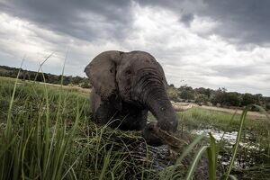 FILES-HEALTH-US-NATURE-ANIMAL-RESEARCH-BOTSWANA-SAFRICA