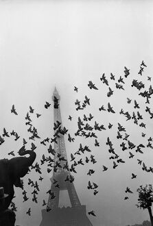 vintage archive/flight pigeons eiffel tower