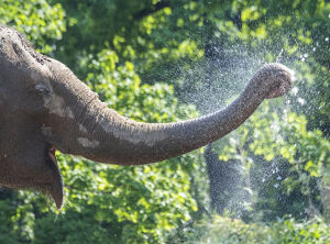 offbeat quirky images/offbeat 2019/germany weather heat elephant